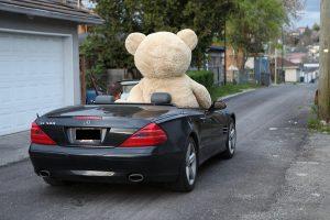 خرس ولنتاین در خودرو